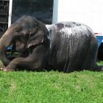 soapy elephant